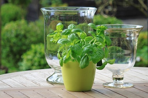 A Guide For Growing A Kitchen Herb Garden