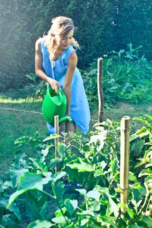 5 Useful Gardening Tips For Newbies
