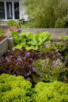 Interesting Facts About Urban Gardening