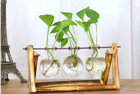 Best Terrariums for Beginner Gardeners