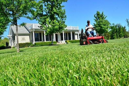Does Frequent Mowing Thicken Grass