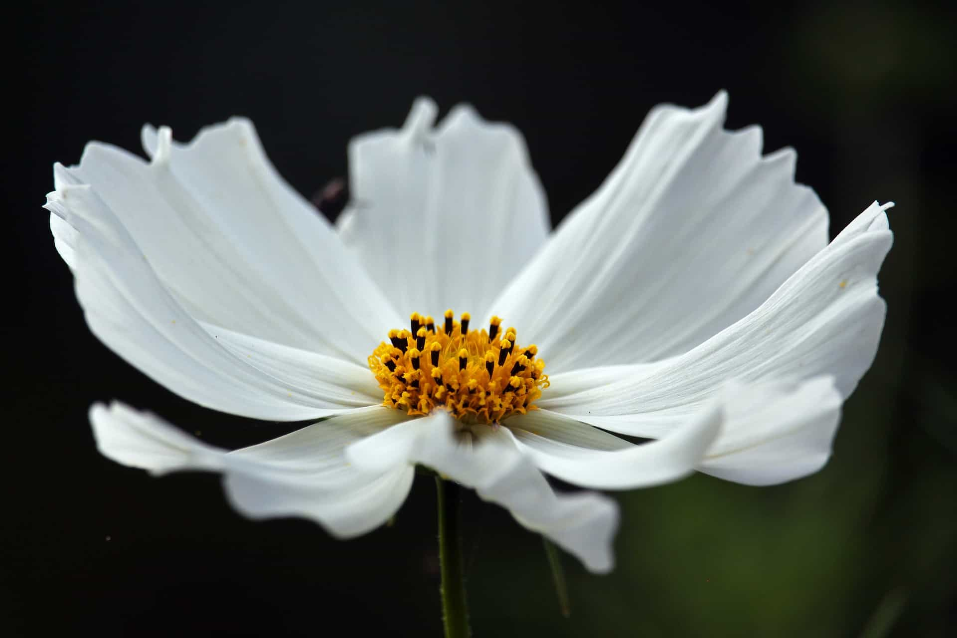 Know About The Most Popular Flowers In the World