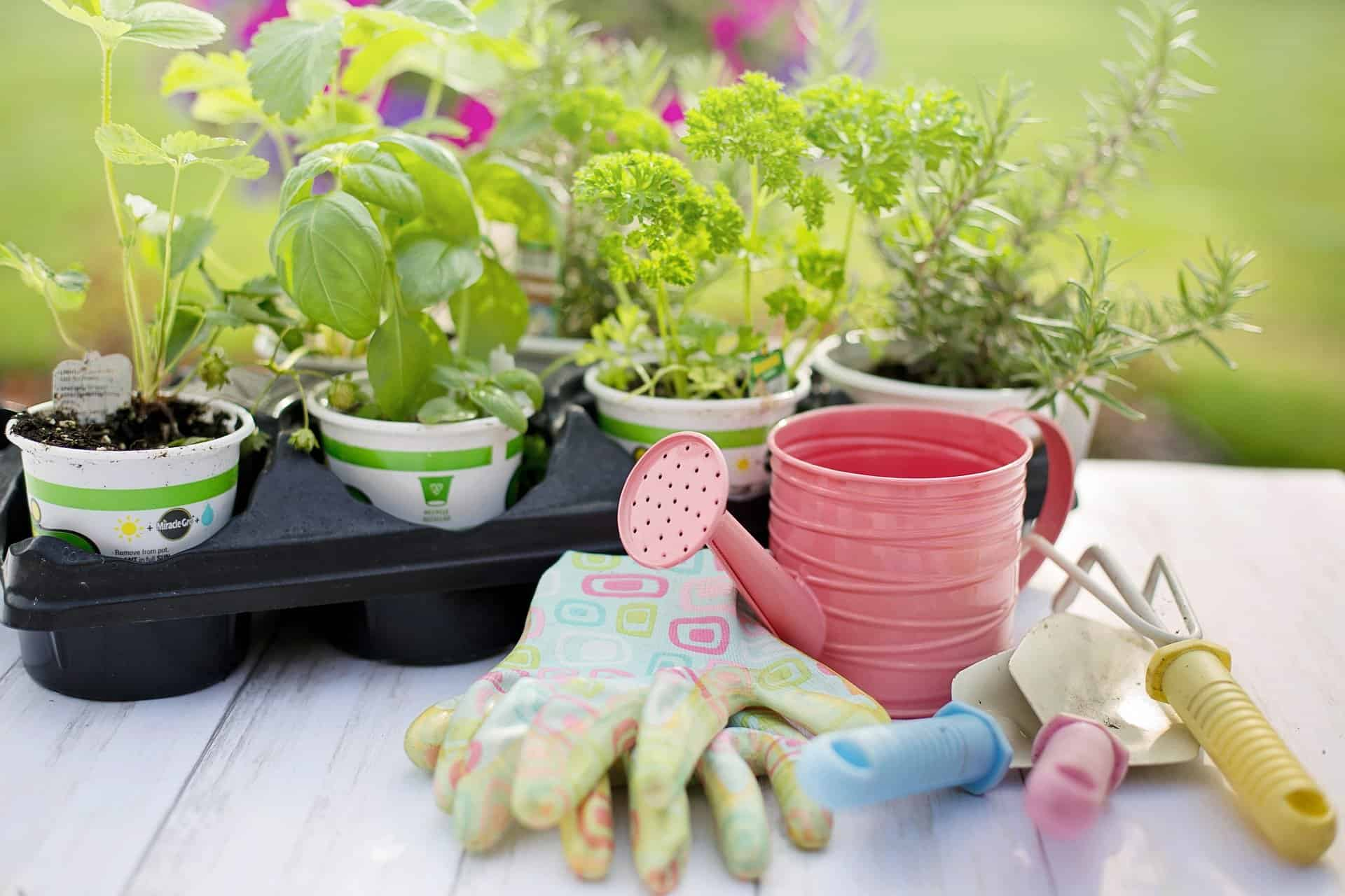 Pruning Tool Kit For Gardening