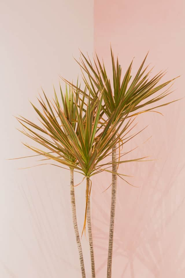 How to Grow a Fake Indoor Plant