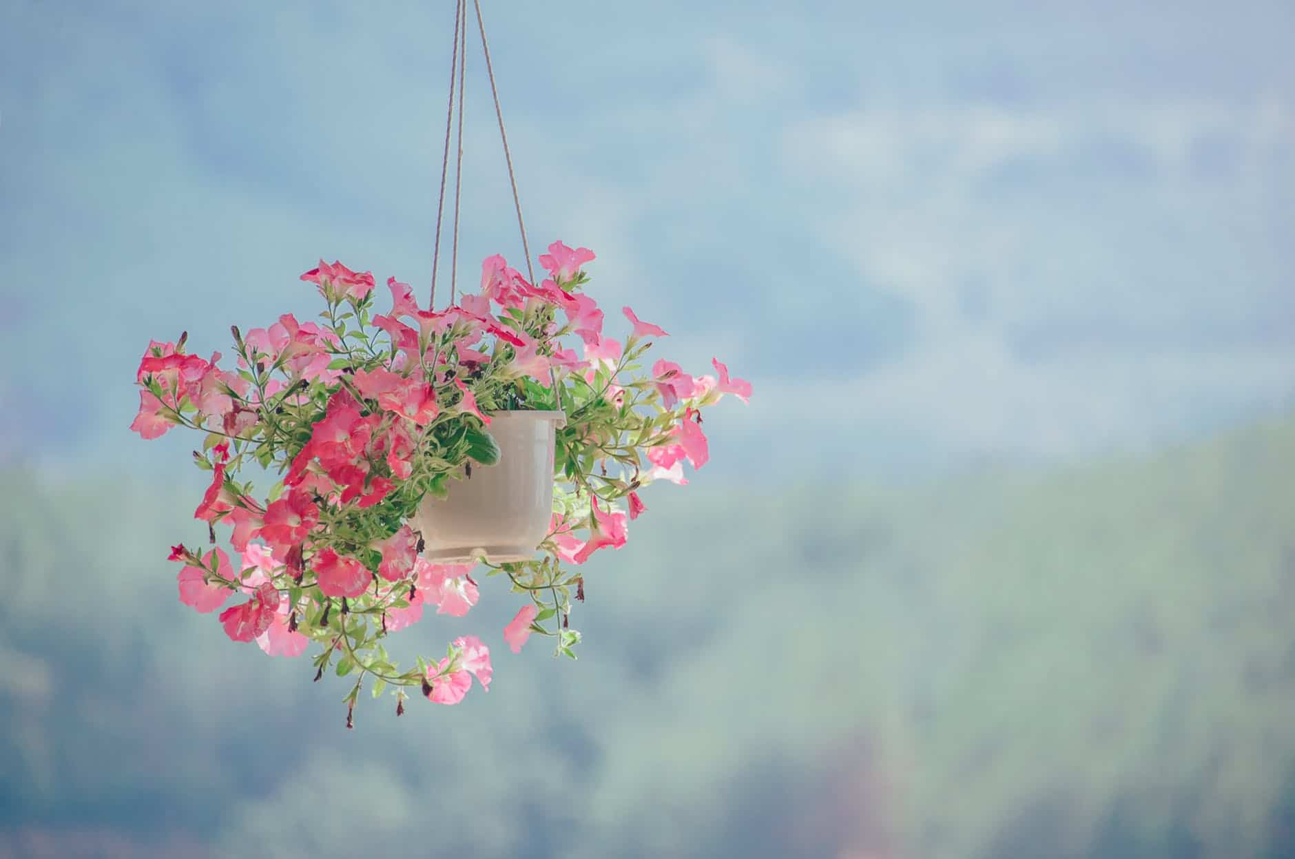 Plant Hanger And Other Gardening Products You May Like
