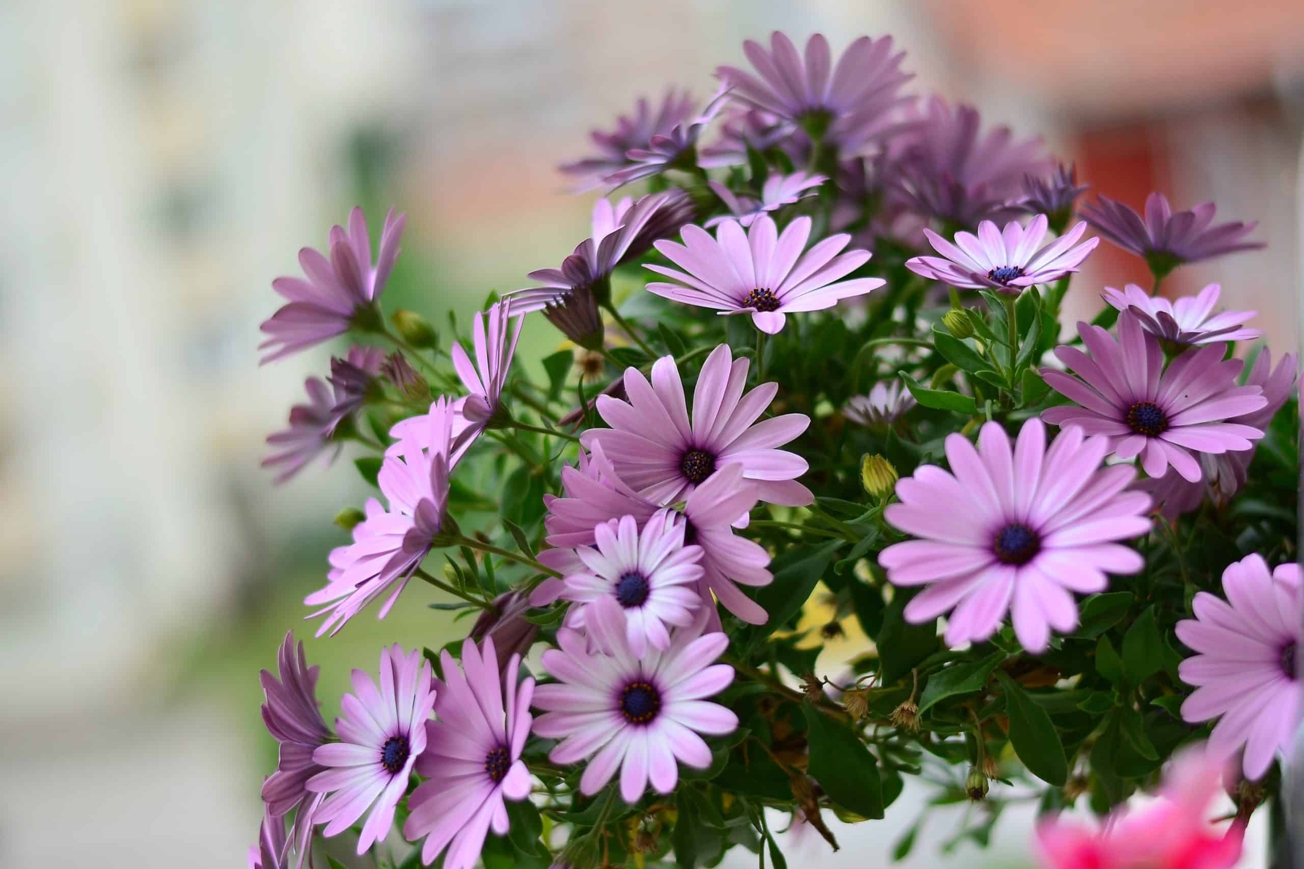 Flower Garden - How to Choose the Best Plant