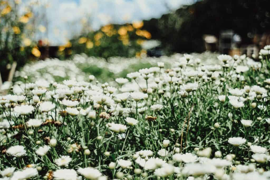 Choose The Beautiful Flowers For Gardens