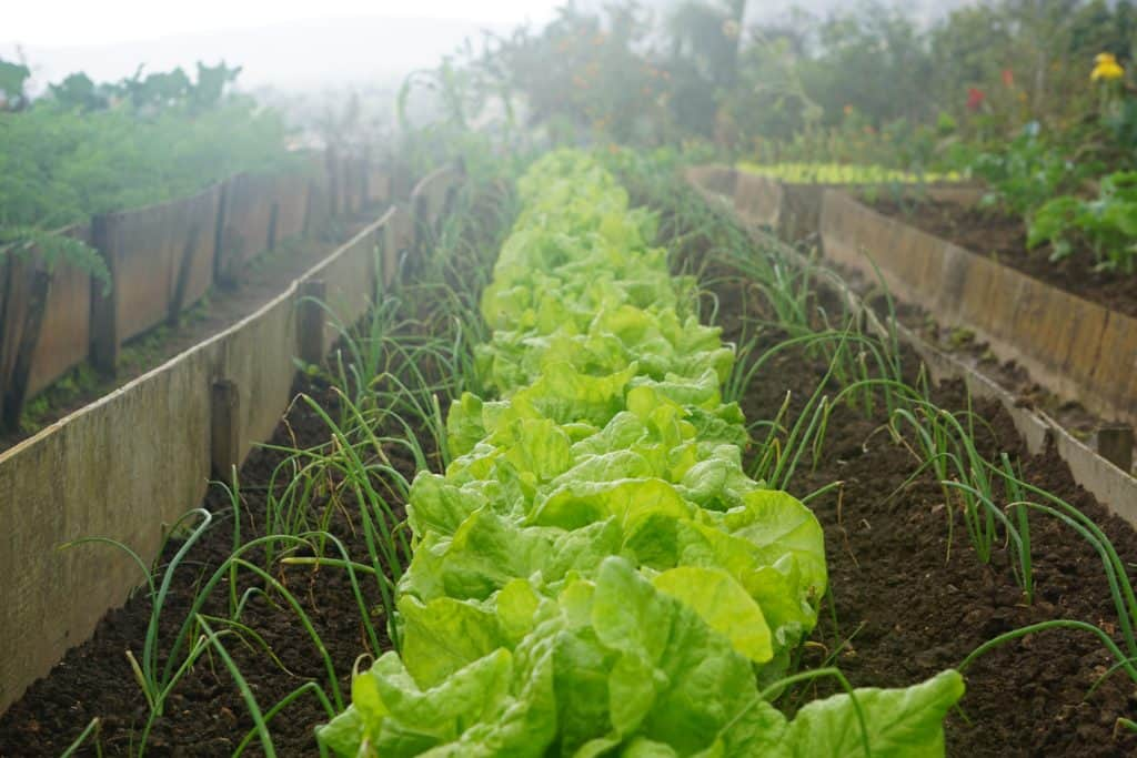 Tips For Growing Vegetable Effectively