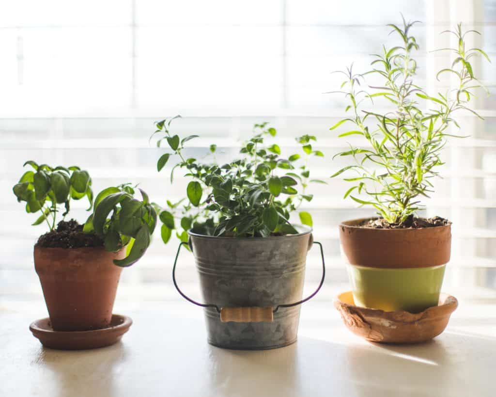 Transform Your Indoor Vegetable Garden