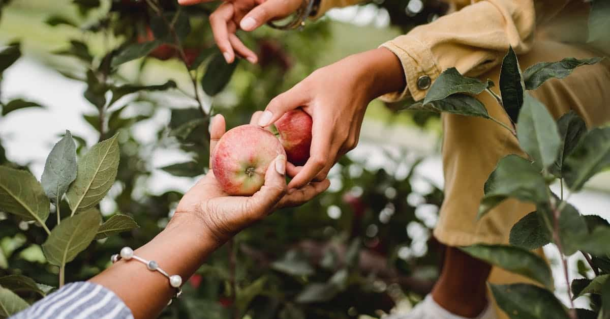 A hand holding an apple tree