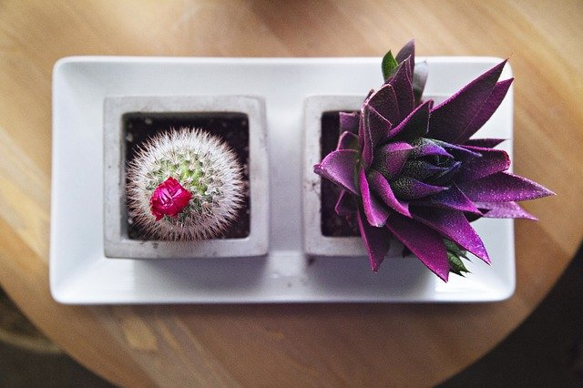 A box filled with purple flowers on a table