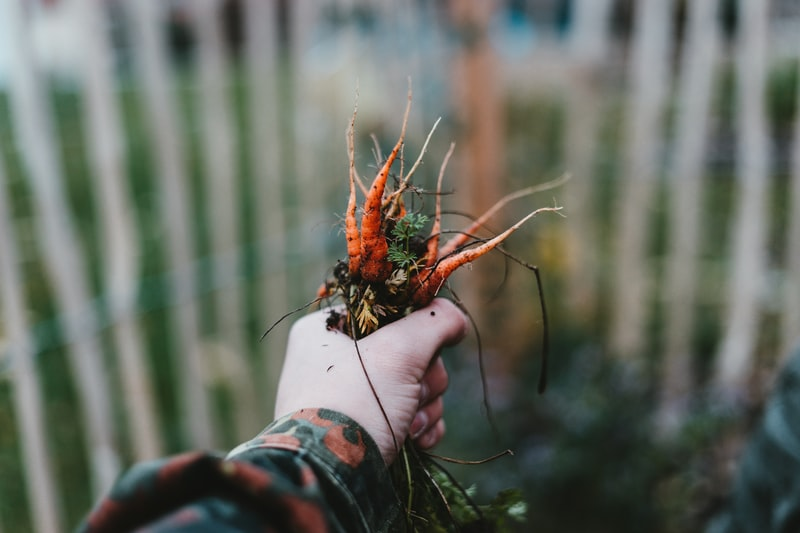 A hand holding plant